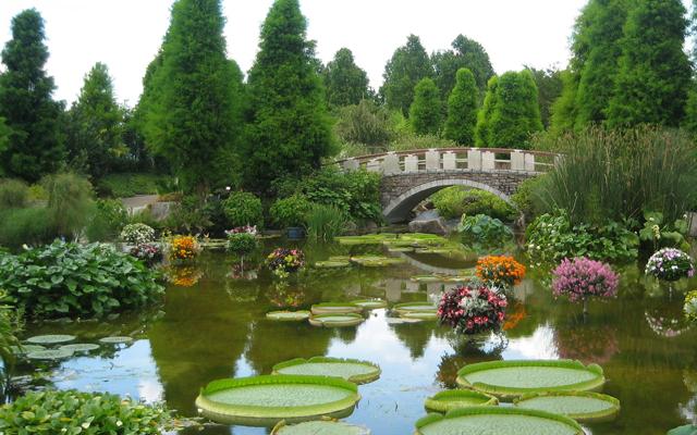 琵琶湖水生植物園